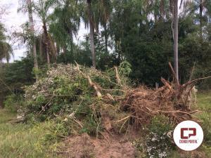 Polícia Ambiental de Umuarama flagra pá carregadeira suprimindo árvores nativas em Tapira