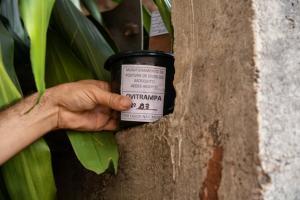 Armadilha pega ovos do mosquito da dengue para medir infestação em Umuarama
