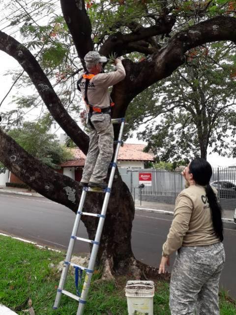 Saúde reforça ações para conter avanço dos casos de dengue em Umuarama