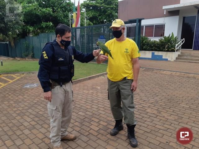 PRF de Guaíra resgata ave silvestre com sinais de maus tratos