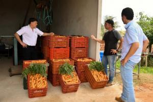 Produção de cenoura e beterraba surpreende em propriedade de Santa Eliza