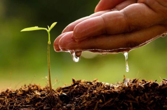 Paraná Mais Verde planta 413 mil árvores nativas