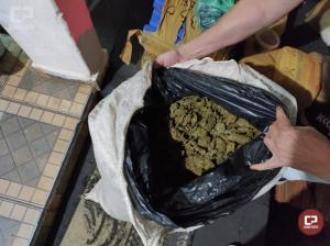Polícia Civil de Umuarama apreende 100 kg de maconha, drogas sintéticas e autua em flagrante 5 pessoas