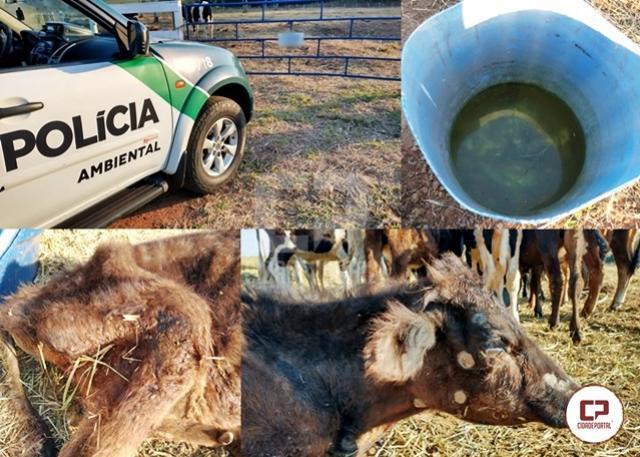 Morador de Umuarama é multado por prática de maus tratos a bovinos