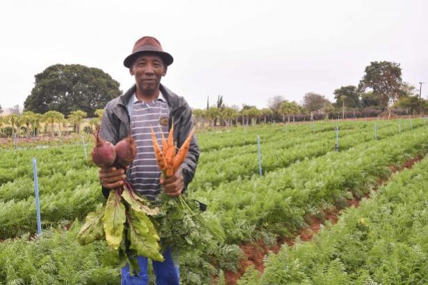 Pequenos produtores iniciam colheita de beterraba e cenoura em Umuarama