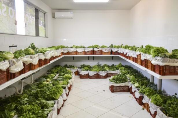 Município distribui cestas verdes para famílias com insegurança nutricional