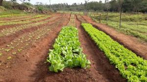 Dia do Agricultor em Umuarama lembra a importância do homem no campo