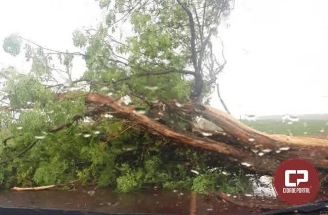 Policia Rodoviária Estadual faz retirada de árvore após chuva forte em Assis Chateaubriand