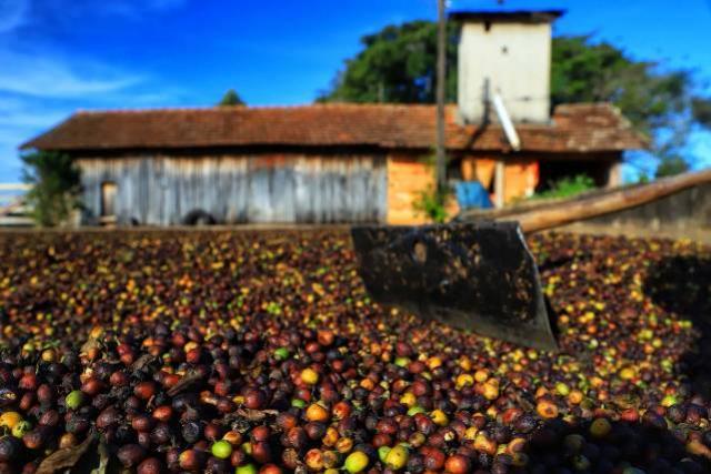 Café renasce no Paraná e qualidade da produção de Carlópolis é destaque no País