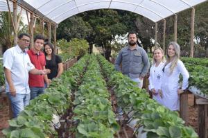 Produtores apostam no Cultivo de Morangos em Janiópolis