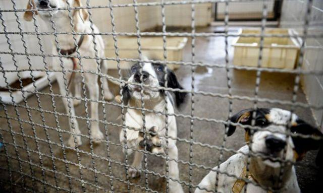 Adoção e abandono de animais domésticos aumentam durante a pandemia