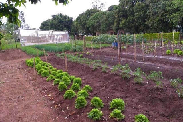 Projeto da UEM usa horticultura para ressocializar dependentes químicos