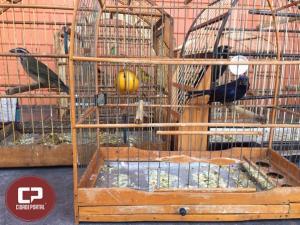 Polícia Ambiental notifica duas pessoas por manter aves em cativeiro no município de Goioerê