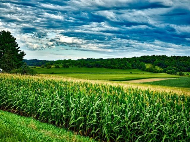 Culturas agrícolas serão fiscalizadas em 52 municípios do Oeste do Paraná