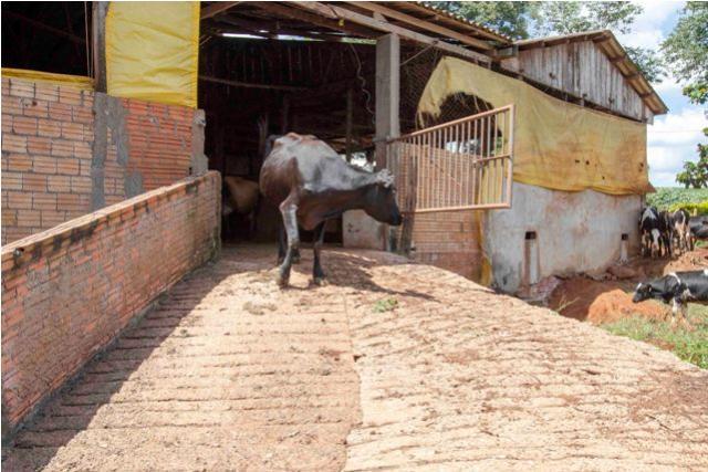 Fundo de Estábulo: Executivo encaminha PL de apoio à pecuária leiteira