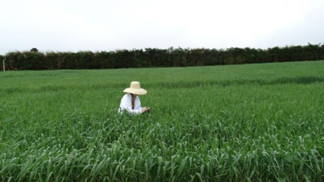 Engenheiros Agrônomos contribuem para o desenvolvimento do agronegócio no Paraná e no Brasil