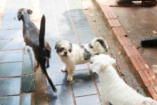 Mais 40 animais são vacinados por meio da coordenação de defesa e proteção animal em Toledo