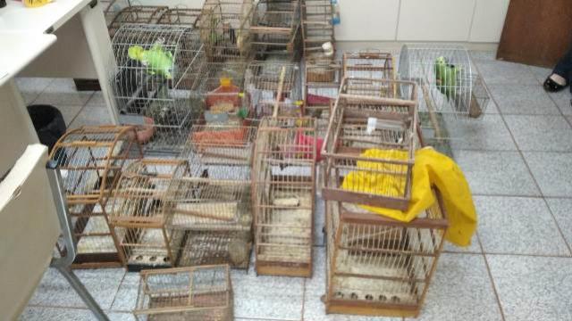 Instituto Água e Terra apreende mais de 100 aves silvestres na região de Toledo