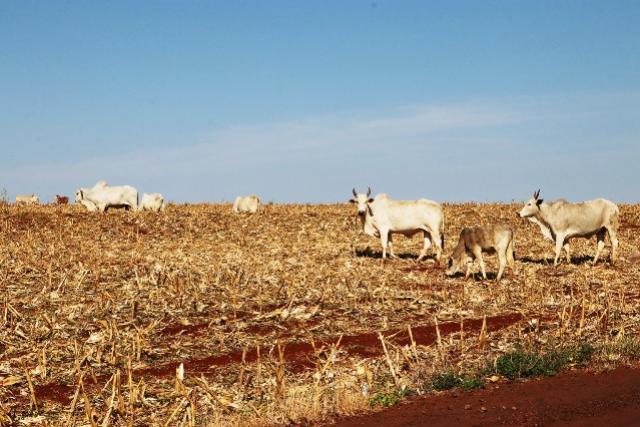 Palestra sobre bovinocultura leiteira aborda cuidados com inseminação artificial em Toledo