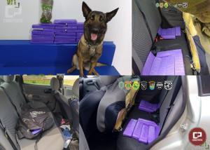 BPFRON e Exército Brasileiro apreendem drogas em Mercedes