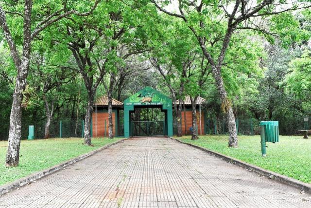 Dia da Árvore: Trilha do Parque Ecológico será reaberta na terça-feira, 21