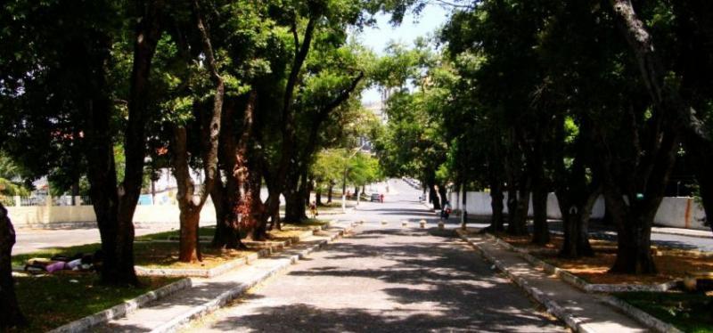 Árvores bem cuidadas, cidades saudáveis