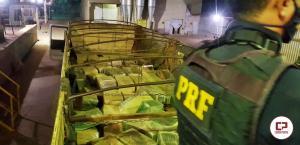 PRF apreende 11 toneladas de maconha no Paraná, droga estava escondida em meio a carga de milho