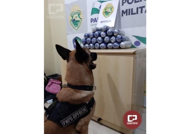 BPFron apreende mais de 23 kg de haxixe em ônibus na cidade de Cascavel