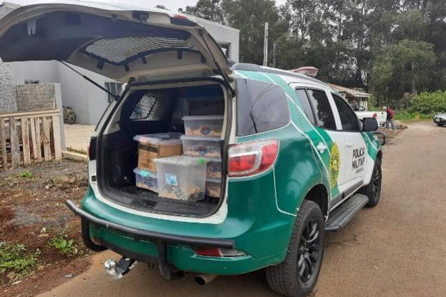 Estado identifica criador ilegal de ouriços em Guarapuava, homem recebeu multa de R$ 13,4 mil
