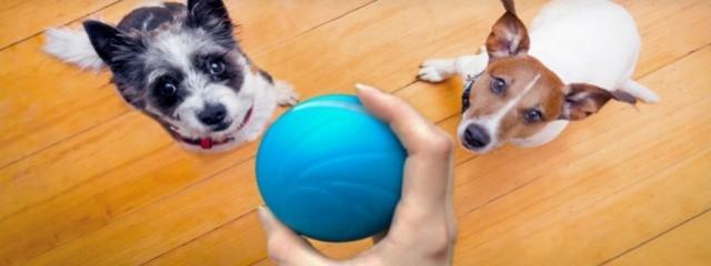 Smartbolinha: o novo brinquedo tecnológico para o seu animal de estimação