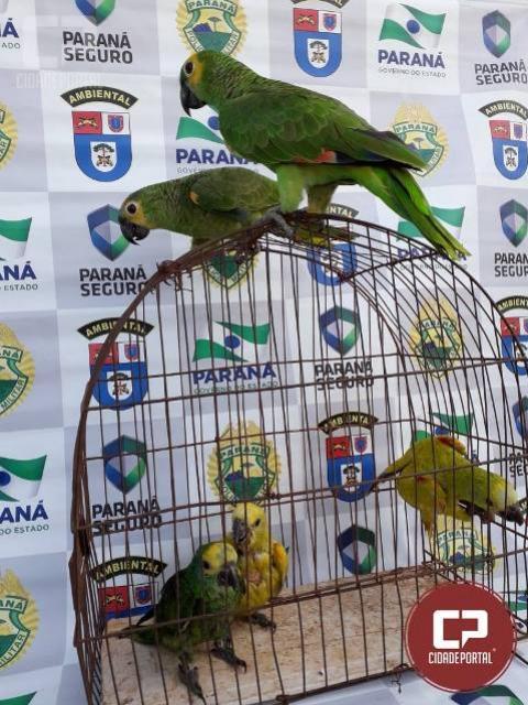 Polícia Ambiental recupera cinco pássaros mantidos em péssimas condições em Alto-Piquiri