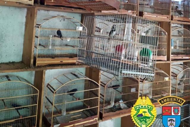 Batalhão Ambiental resgata 116 pássaros em cativeiro ilegal no Sudoeste