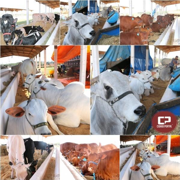 Exposição de animais de grande porte é atração na Expo-Goio 2019