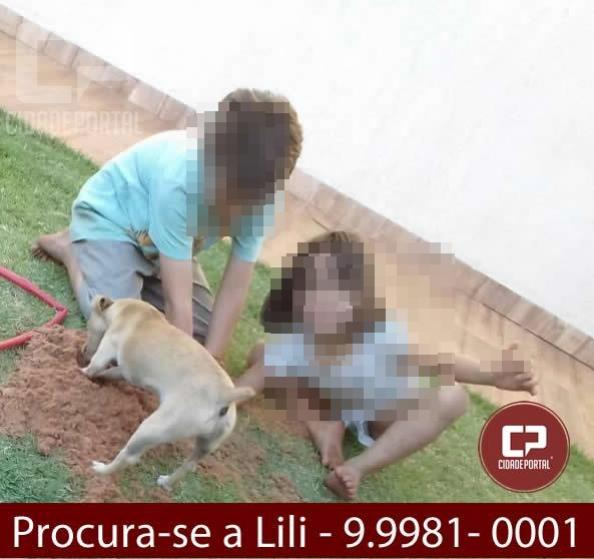 Procura-se uma cachorrinha da raça PISTICHER que atende pelo nome de Lili - Ajude ela voltar para casa