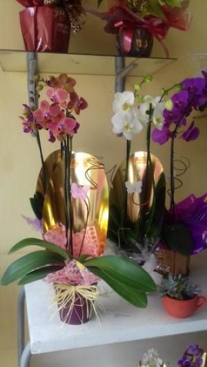 Uma ótima maneira de demonstrar o amor que sentimos nesse natal, é com Orquídeas!