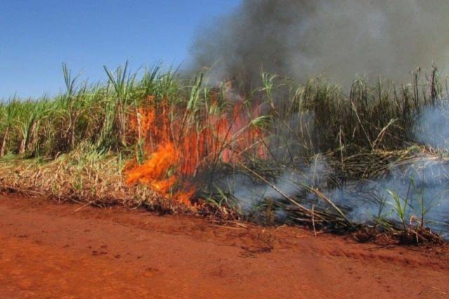 Adiado prazo para suspensão da queima de cana-de-açúcar