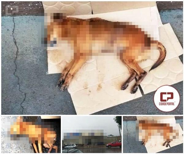 Cachorro morre após ser atropelado na Marinho Tavares- motorista não prestou socorro