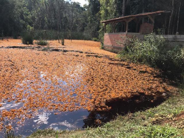 Captação no rio Despique é retomada após vazamento em oleoduto