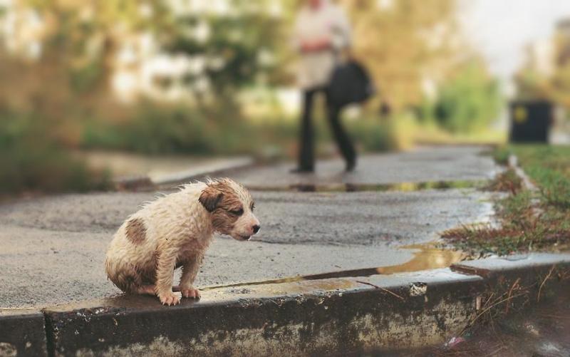 MP aciona prefeitura de Mamborê para construir e manter abrigo para animais abandonados