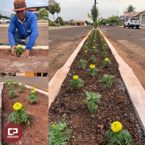 Canteiro central de Quarto Centenário recebe novas flores