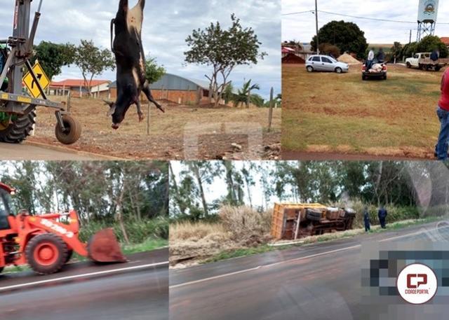 Animal na pista causa acidente entre dois caminhões na BR-272