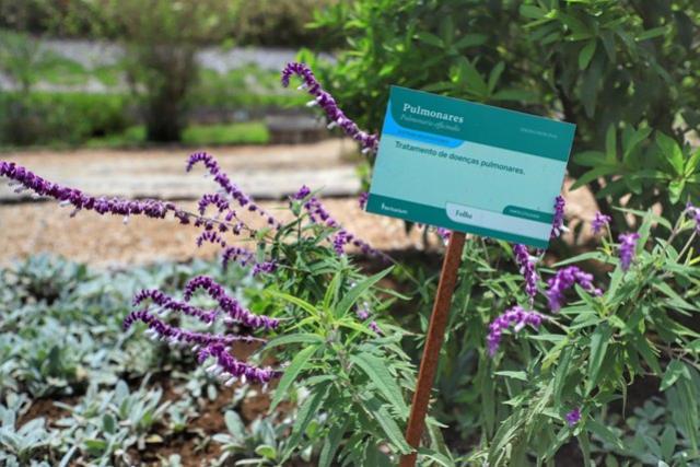 Estado é destaque no País na produção de plantas medicinais