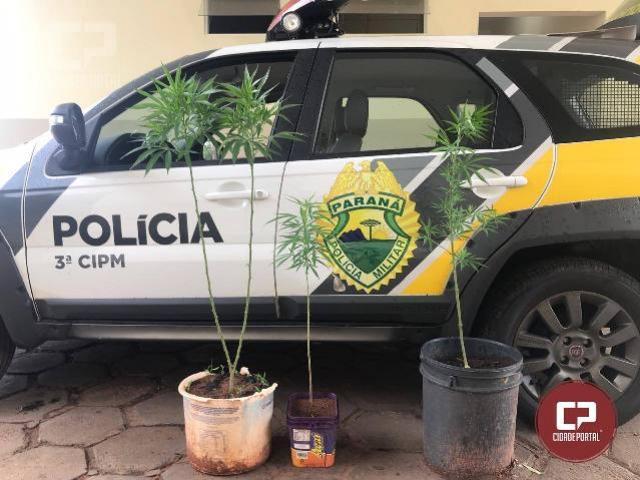 Polícia Militar de Loanda apreende pés de maconha que eram cultivados em residência