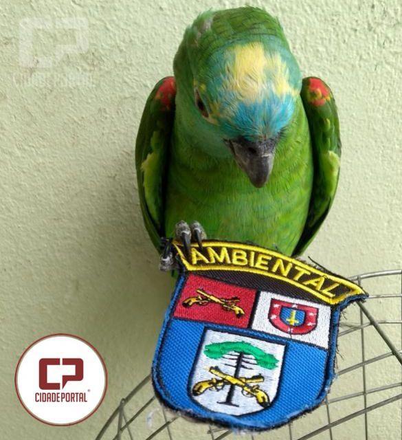 Polícia Ambiental de Umuarama apreende aves silvestres mantidas em cativeiro sem autorização