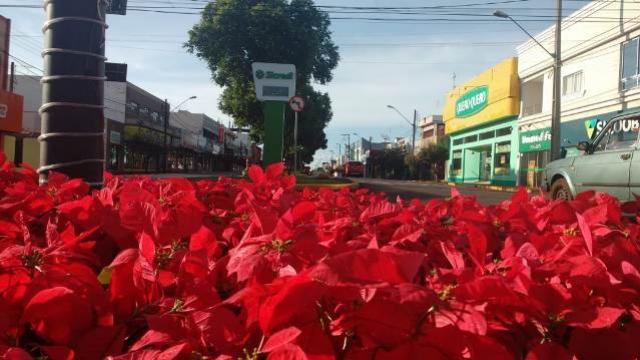 Fim de ano com muitas flores e um colorido especial em Ubiratã