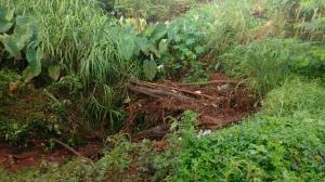 Limpeza no Córrego Central em Ubiratã visa diminuir riscos de alagamentos