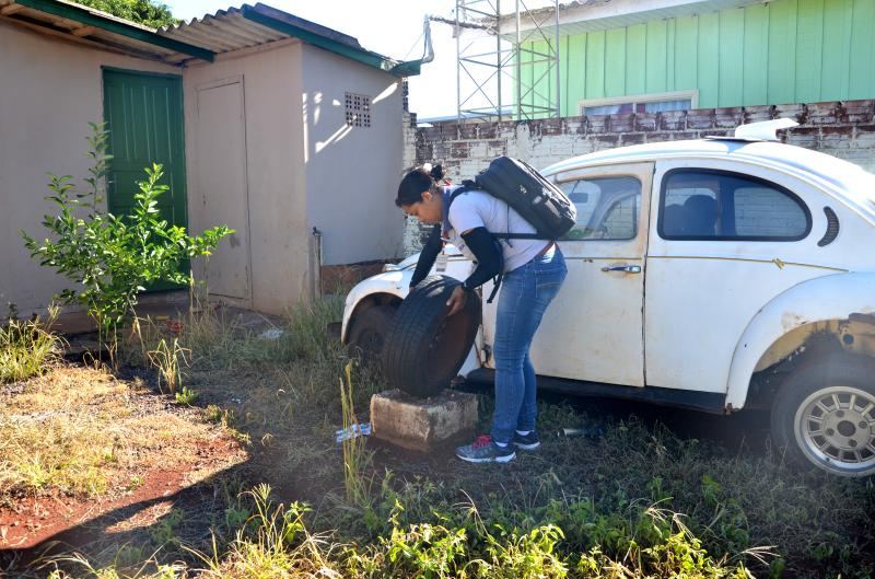 Calor e chuva: ambiente preferido do Aedes aegypti