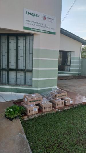 Produtores de Juranda buscam melhoria na produção de  Morangos com aquisição de matrizes melhoradas