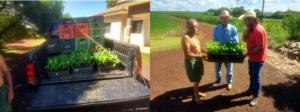 Foco Rural entrega mudas de banana para agricultores em Juranda