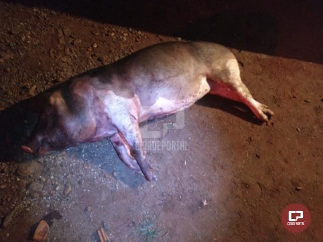 PM de Juranda prende duas pessoas após matarem porco de propriedade rural